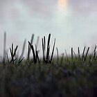 Dewy Grass at Dawn  by RTurley