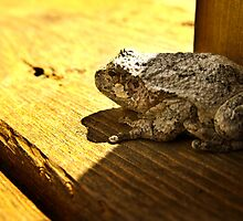 American Toad by Brandon Edwards