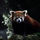 Red Panda by weigi