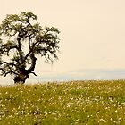 Valley Oak and Popcorn Flowers by John Butler