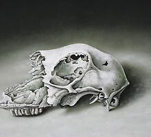 skull of a sheep by ukopost
