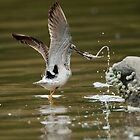 Yellow Legs Catches a Fish by David Friederich
