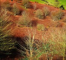 Scatterings On A Hillside by Nigel Finn