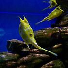 UShaka Aquarium - Yellow Fish by CharziG