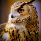 Portrait of eagle owl by Shehan Fernando