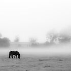 Foggy Morning: horses by therkd