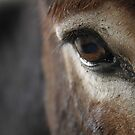A Donkey's Eye by AlexKokas