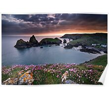 Cornwall - Kynance Cove Poster