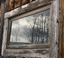 Aspens Reflected in Ghost Town Window by rwhitney22