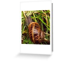 Nice day for a slither! Greeting Card