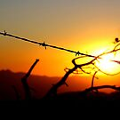 Sunset over Four Peaks Wilderness, with Barbed Wire by rwhitney22