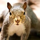 Got Any Nuts? by Geoff Carpenter