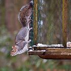 squirell by AttiPhotography