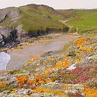 Devon:  Colourful Lichen at Soar Mill Cove by Rob Parsons