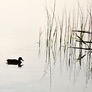 Peace and Simplicity by Daidalos