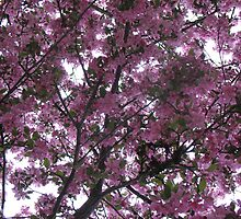 Bubbling Blossoms by MarianBendeth