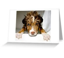 Doggy Bath Time Greeting Card