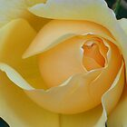 My Yellow Rose by reneecettie