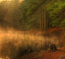 Misty Morning Forest Lake by Michael Mill