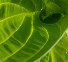 Hosta-ile Waters! (for the Fishlike Group) by MagsWilliamson