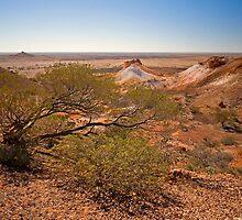 Exposed Tree, Breakaways, Coober Pedy,SA by Richard  Windeyer