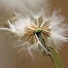 Seed Head  by Jenny Dean