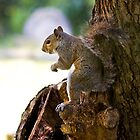Secret Squirrel by Geoff Carpenter