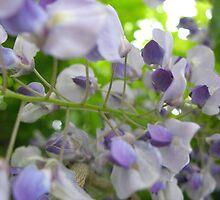 Lavender Waltz Flowers by MarianBendeth