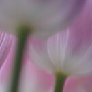 Tulips Abstract by AnnieSnel