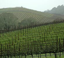 Wine Country by kattand