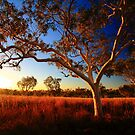 bush country by adouglas