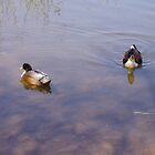Yin Yang Ducks by staroflife
