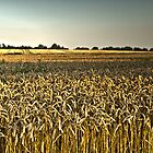 Cropfield by Hilthart Pedersen
