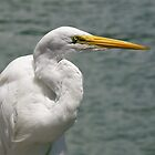 Great Egret by Jeff Clark