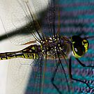 """DRAGONFLY ON PERGOLA"" macro by Justine Walke"