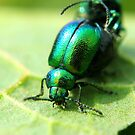 Metallic Beetles by Robbie Labanowski
