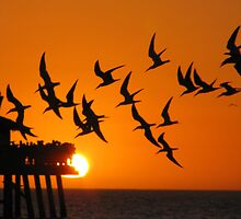 Seagull Silhouette by Sazzyshortness
