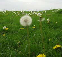 Field of time (May 2010) by fatchickengirl