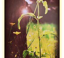 Summer daze by Terra 'Sunshine' Gilbert