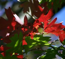 red and green by Éilis  Finnerty Warren