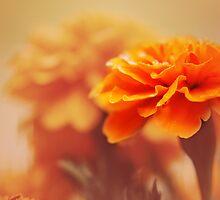 Marigold Boy O' Boy by Lissywitch