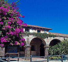 Mission San Juan Capistrano - Flowering Tree by Cupertino