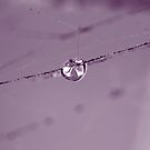 """RAINDROP IN COBWEB"" macro by Justine Walke"