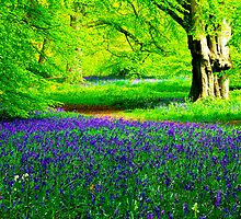 Bluebell Wood - Thorpe Perrow #2 by Trevor Kersley