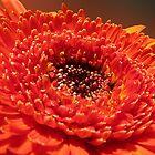 Orange Flower by Anteia