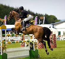 Show Jumper. Fence number five. by Country  Pursuits