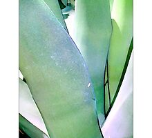Agave #2 - Postcard by Michelle Bush