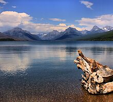 old stump points the way, Glacier National Park by JamesA1