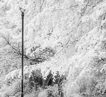The Lampost - Infrared by Ann Garrett