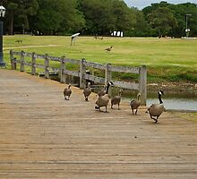 Why Did the Geese Cross the Bridge? by NikonJohn